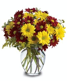 Maroon and Yellow Daisies Bouquet