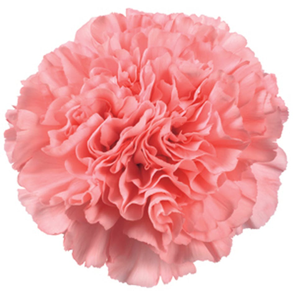 Carnations Diy Flower Packages Albuquerque Florist Flower Delivery