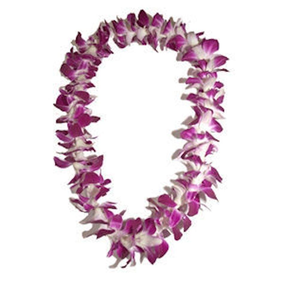 Orchid lei graduation flowers graduation lei albuquerque new mexico izmirmasajfo