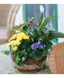 Long lasting variety of plants!