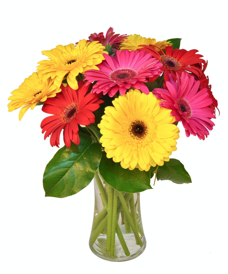 Gorgeous Gerberas : Bright And Cheerful!
