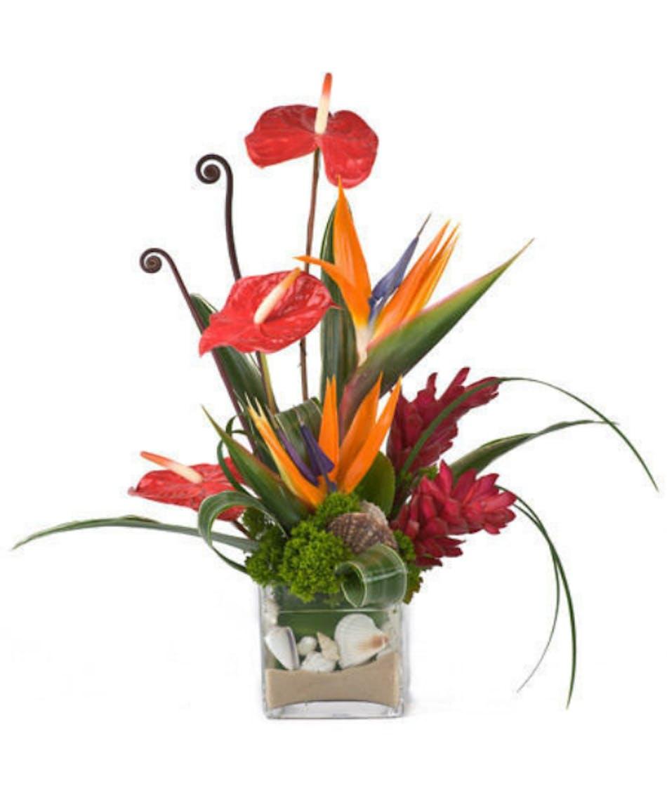 Tropical flowers albuquerque tropical flower arrangements tropical flowers albuquerque tropical flower arrangements albuquerque anthurium flowers albuquerque izmirmasajfo