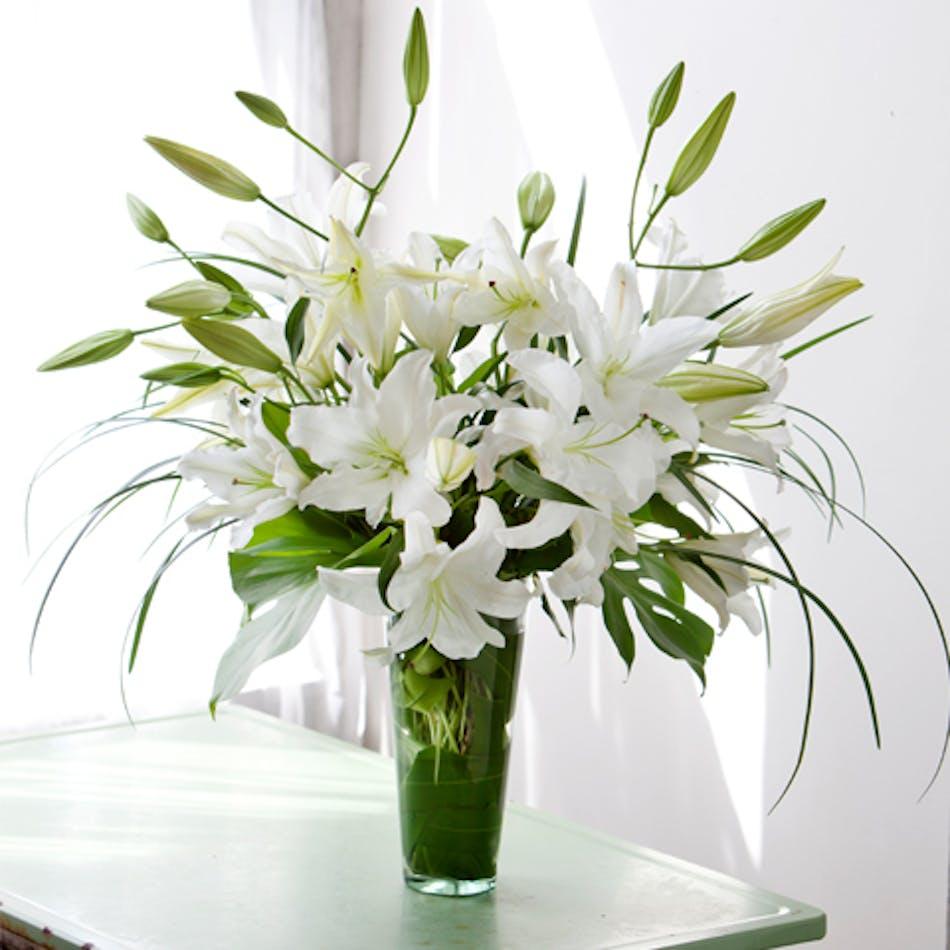 White lily oriental lily casablanca lily albuquerque new mexico izmirmasajfo