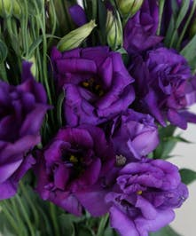 10 Stem bunch of Lisianthus
