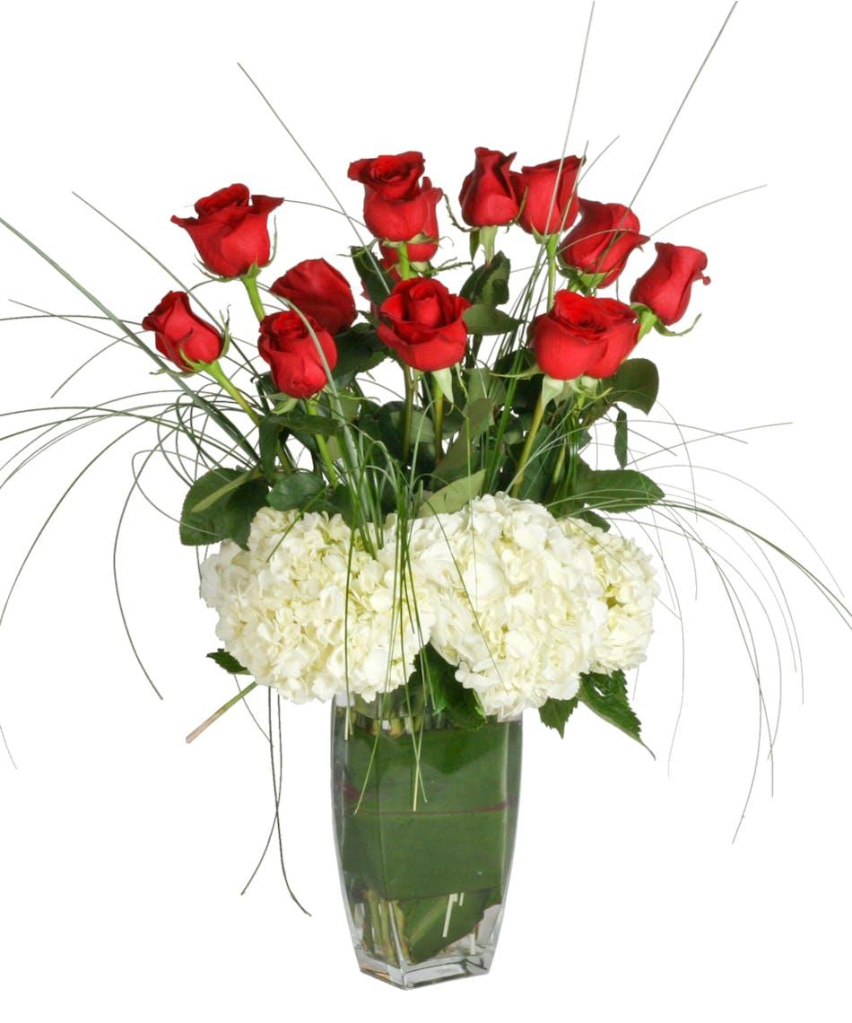 Luxury Roses: 15 Beautiful Roses!