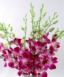 10 Stem bunch of Dendrobium Orchid