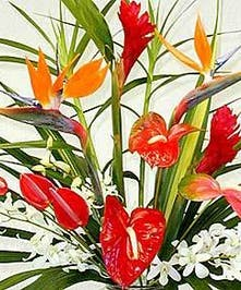 A tropical designed bouquet in your price range!