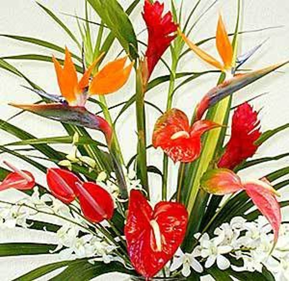 Tropical Bouquet, Tropical Flowers Bernalillo, Exotic Flowers ...