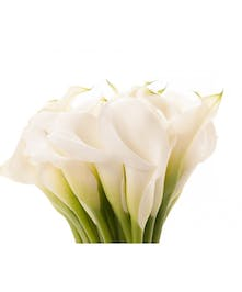 10 Stem bunch of Calla Lily Mini
