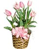 Blooming Tulip Plant In a Basket