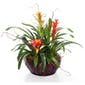 Bromeliad Garden In a Basket with Nature Accents