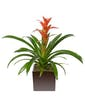 Upgrade Your Bromeliad Plant Into a Round Decorative Metal Tin (Our Recommendation)