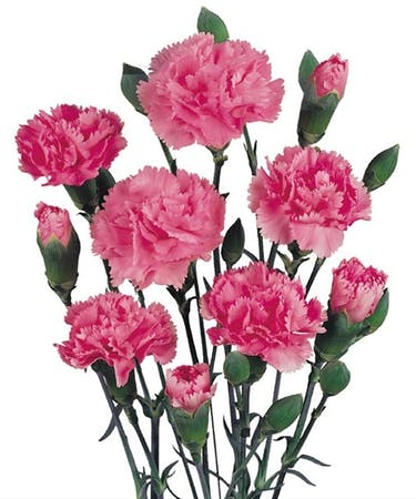 Mini Carnations Packaged Flowers