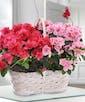 Double Azalea Basket with Nature Upgrade