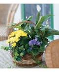 Standard European Garden Basket