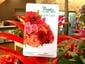 Peoples Flower Shops Gift Card