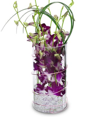 Orchid Drop In