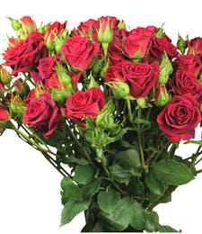 Premium Roses Spray Roses