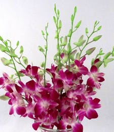 Dendrobium Orchid Packaged Flowers