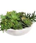Petite Succulent Garden in Glazed Container