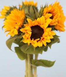 Sunflower Packaged Flowers