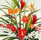 Tropical Bouquet Designer's Choice