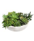Deluxe (Larger) Succulent Garden in Glazed Container