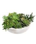 Standard Succulent Garden in Glazed Container