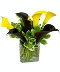 October Design of the Month Calla Lillies (Yellow and Black)